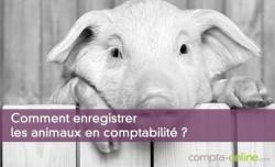Comment enregistrer les animaux en comptabilité ?